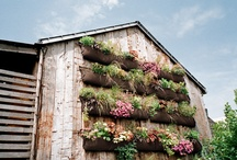 BARNS / by Mary Posten