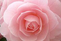 Flower Study / by Brooke Ogletree