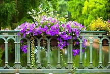 Curb appeal and Gardening tips! / by Bonnie Haley