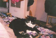 Tuxedo Cats / by Christine Blandina