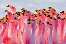 All Things Flamingo / by Candie Vaughan