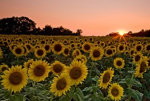 Favorite Flowers/Gardens / by Maureen Danbury