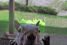 Squirrels / We have just a few squirrels here at Susquehanna--prepared to pop out from a trash can at any time! / by Susquehanna U