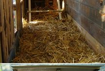 Chicken coop ideas / by Cathy Combs-Langley