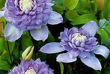Purple Makes Me Happy... / by Ladybug Wreaths, Nancy Alexander