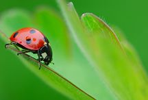 Beneficial Garden Bugs to Know and Love / After almost pitching a ladybug larvae while doing some pruning, I realized that many garden lovers might not know their beneficials from their nasties...Here is the beauty pageant. / by Jodie Cook Landscape Design