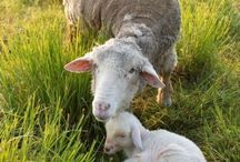 Animal Mothers/Babies / by ARKlady