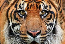 Beautiful Animals / by Melissa Reed