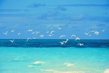 Beaches / by Susan Braudaway