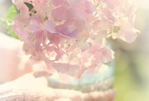 Pastel Pink Paradise / by Bianca Marie