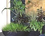 Garden Styles: Tropical Noir / by Rochelle Walter Greayer