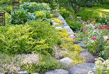 Garden & Outdoor / by Darcy Designs