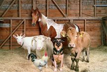 Farm Life / by Sherry Gallant
