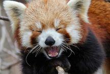 HISSterical / by Binghamton Zoo