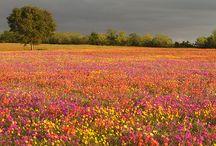 FLOWERS WILD / by Kay Droege