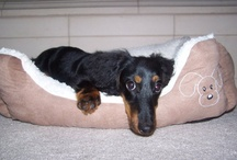 Tyson's Doxie Page / by Ivonne Agraan