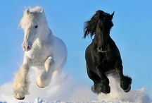 Horses / by Aéon