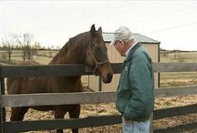 UKAg Equine / by University of Kentucky College of Agriculture, Food and Environment