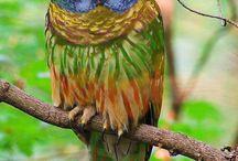 Bird Photos / by Patricia Panzica