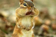 Cute critters! / by Sonna Flowers Wann