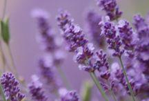 Flowers / by Valentina De Santis
