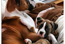 boxers / by Dawn Crader