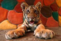 Cute Animals / by Linda Hess