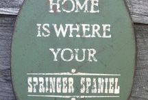 Springers / Home is where your springer is.  / by Emily Bierce