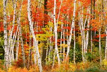 Fabulous Fall / by Melissa Lare Peterson