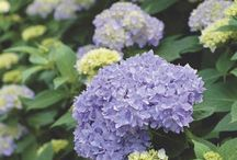 Gardening Inspirations! / by Megan Watson