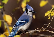 Bird Watchin / by Thuy Smith Outreach International