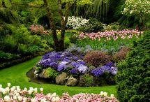 Gardening / by Ed N Pam Clark
