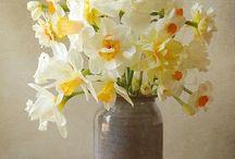 Springtime / by Heather Burlew-Hayden