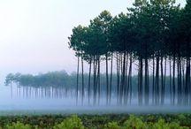 Beautiful scenery / by Jana Blair