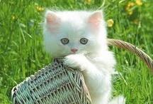 POSE for me kitty / by Brenda Sandrick