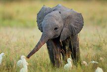 I love ELEPHANTS / Peaceful but powerful. / by Aura Cook