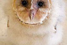 cute animals / by Kathy Rich