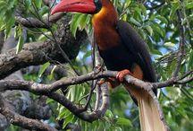 BIRDS / The natural world of flight / by Henry Kielarowski