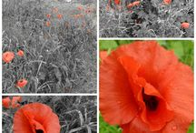 First World War / by Claire Toplis