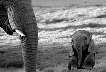 Animals / by Samantha Powell