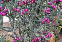 Cactus and succulents / by Pierina