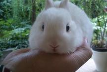 Beautiful Bunnies / by Christine Rhee