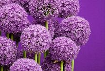 Purple / by Dana