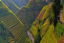 Vietnam / by Liliann B