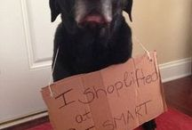 Animal shaming / by Marina Callo-Mcdonald