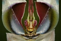aNiMaLia ~ A BuG's LiFE 1 / Aliens do live on our planet! / by ~ KaiZeN ~