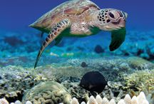 SeaLife / Fascinating images of life under the sea! / by Beach Vacation Rentals