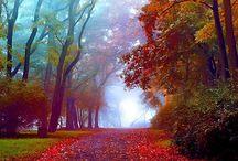 colorful autumn / by Kumiko Sayuri