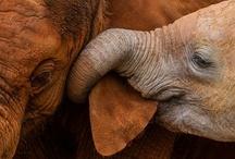 Elefantes / by Silvia Alicia Paz
