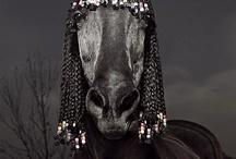 funny animals / by Malinda Balentine